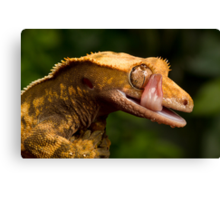 Crested Gecko Canvas Print