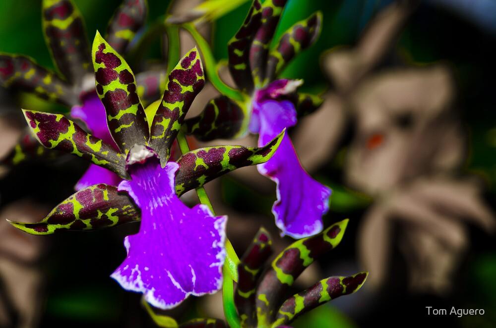 Cymbidium Orchid - First place winner by Tom Aguero