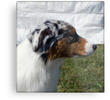 Australian Shepherd Profile Metal Print