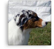 Australian Shepherd Profile Canvas Print