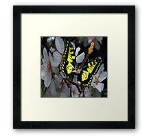 Style Rock Framed Print