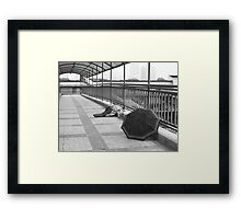 Better Days - Peter Jackson Framed Print