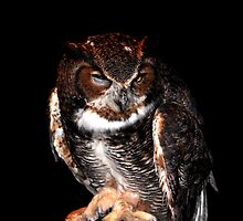 ET the Great Horned Owl by freevette