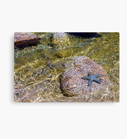 Faux starfish Canvas Print