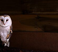 Barn Owl by JPassmore