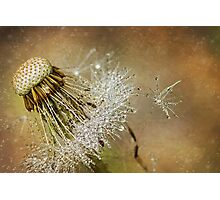 Dandelion drops Photographic Print