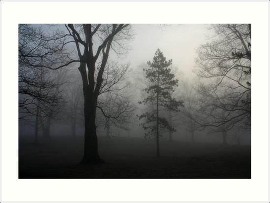 Trees in the Fog by Daniel Owens