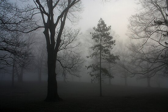 Trees in the Fog by Daniel Owens