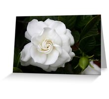 Romantic Night ~ Scent of Gardenias Greeting Card