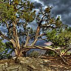 Canyon Tree by Diana Graves Photography