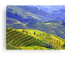 Rice terraces in Longsheng Canvas Print