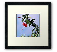 Exotic Bloom Framed Print
