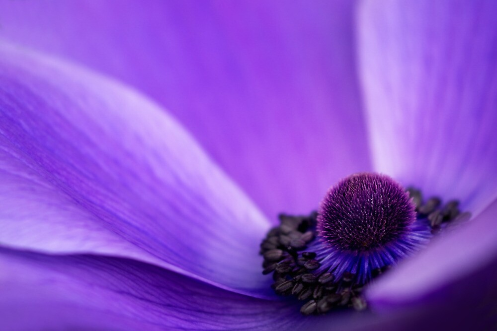Purples by Margaret Barry