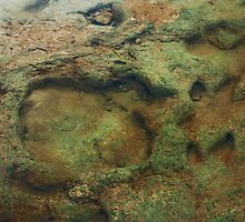 Underwater Dinosaur Tracks by Lisa Holmgreen