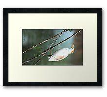 Egret, perched! Framed Print