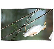Egret, perched! Poster