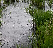 Wetland Series, No. 1 by Lee LaFontaine