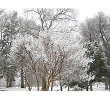Feb. 19 2012 Snowstorm 6 Photographic Print