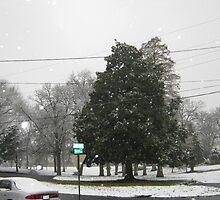 Feb. 19 2012 Snowstorm 7 by dge357