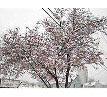Feb. 19 2012 Snowstorm 10 Photographic Print