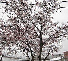 Feb. 19 2012 Snowstorm 11 by dge357