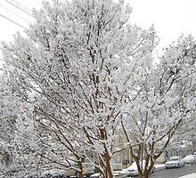 Feb. 19 2012 Snowstorm 13 by dge357