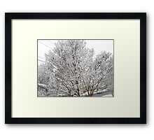 Feb. 19 2012 Snowstorm 13 Framed Print