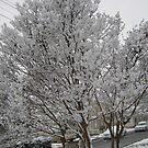 Feb. 19 2012 Snowstorm 14 by dge357