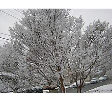 Feb. 19 2012 Snowstorm 14 Photographic Print