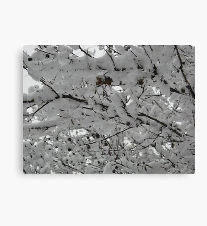 Feb. 19 2012 Snowstorm 15 Canvas Print