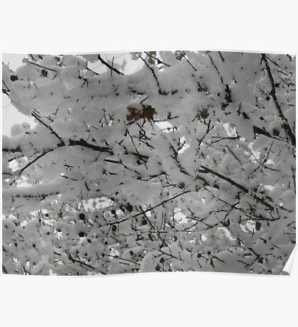 Feb. 19 2012 Snowstorm 15 Poster