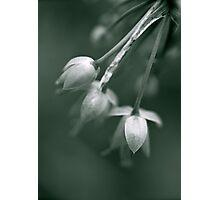 Blue bells Photographic Print