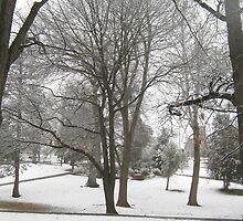 Feb. 19 2012 Snowstorm 17 by dge357