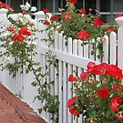Roses On The Front Fence. by Eve Parry
