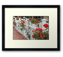 Roses On The Front Fence. Framed Print