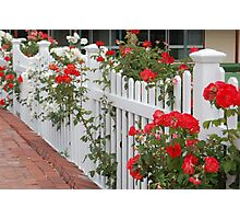 Roses On The Front Fence. Photographic Print
