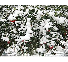 Feb. 19 2012 Snowstorm 24 Photographic Print