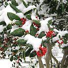 Feb. 19 2012 Snowstorm 25 by dge357
