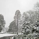 Feb. 19 2012 Snowstorm 26 by dge357