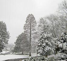 Feb. 19 2012 Snowstorm 26 by dge357