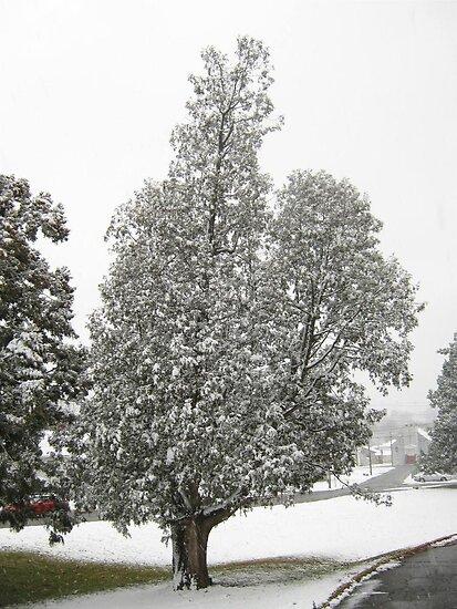 Feb. 19 2012 Snowstorm 27 by dge357