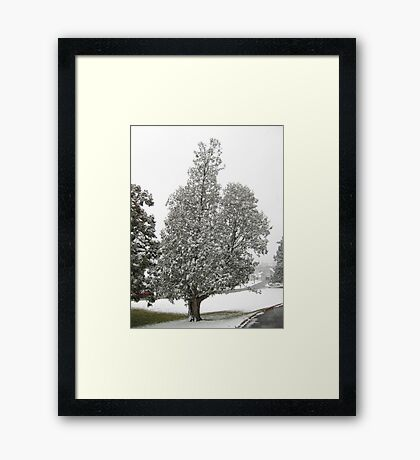Feb. 19 2012 Snowstorm 27 Framed Print