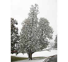 Feb. 19 2012 Snowstorm 27 Photographic Print