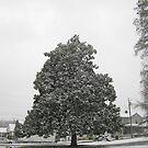 Feb. 19 2012 Snowstorm 30 by dge357