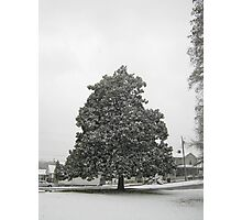 Feb. 19 2012 Snowstorm 30 Photographic Print