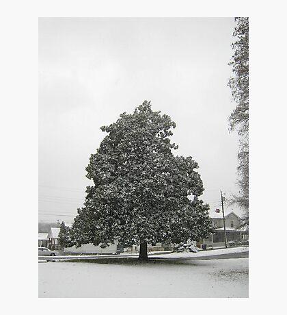 Feb. 19 2012 Snowstorm 30 Photographic Print