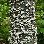 Mushroom Tree by SenskeArt