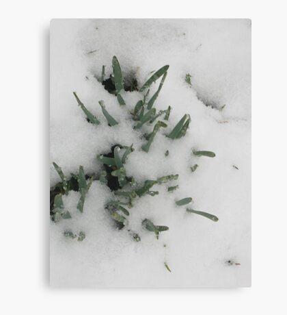 Feb. 19 2012 Snowstorm 31 Canvas Print