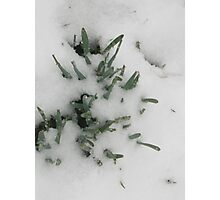 Feb. 19 2012 Snowstorm 31 Photographic Print