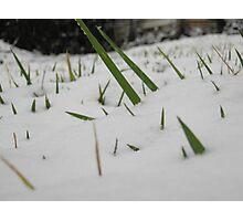 Feb. 19 2012 Snowstorm 32 Photographic Print